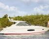 Regal Sport Yacht 42 Sport Coupe Bild 1